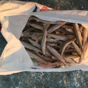 Pilnas maišas šviežios žuvies